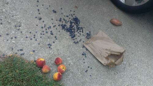 Some staging was required, as the peaches were rolling down the driveway...